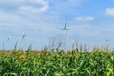 Wind turbines and nature
