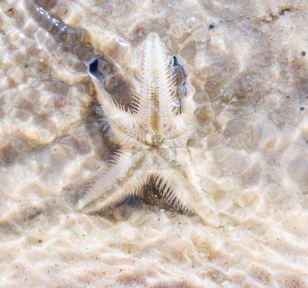 Starfish on beach in Thailand