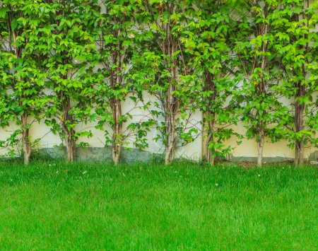 Green grass leaves wall tree