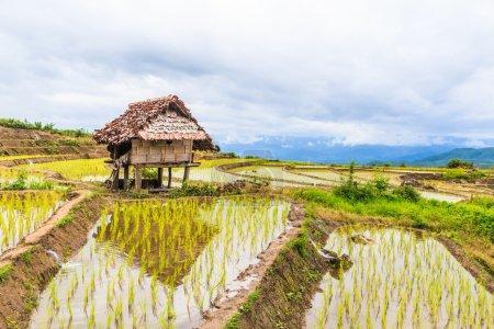 Cabaña de madera y campo de arroz