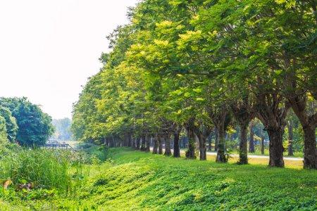 Row of green trees