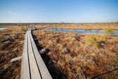 Landscape of swamps with pathway in Latvia.