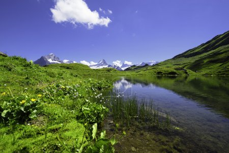 Landscape Scene from First to Grindelwald, Bernese Oberland, Swi