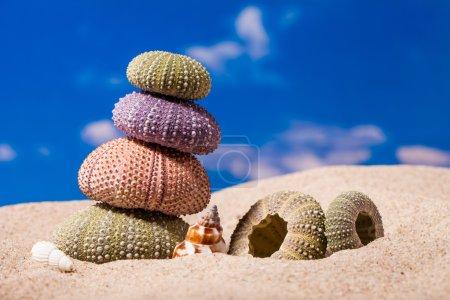 Sea Hedgehog shells ion beach  sand and blue sky Background