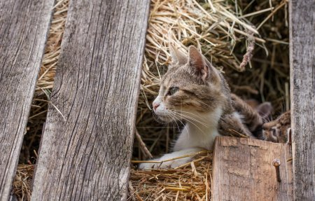 Little kittens in the barn