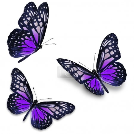 Photo pour Trois papillons violets, isolés sur fond blanc - image libre de droit