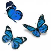 Three blue butterfly