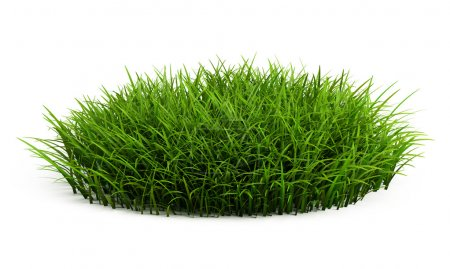 Round patch of fresh grass