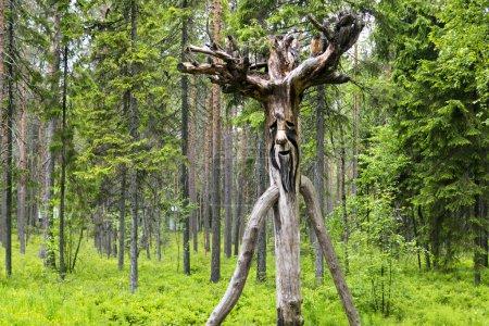 Photo pour Type gobelin de bois russe dans la forêt de pins sauvages, horizontal - image libre de droit