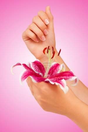 Pink flower in hands on a pink background