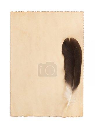 Aged paper parchment