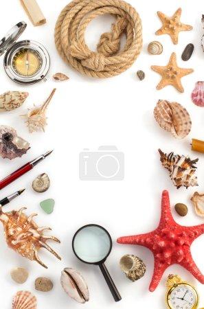 Seashell and sea concept