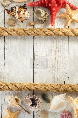 Seashells and ship rope
