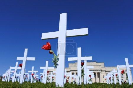 White crosses Auckland memorial museum