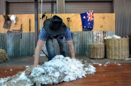 Australian Sheep shearer