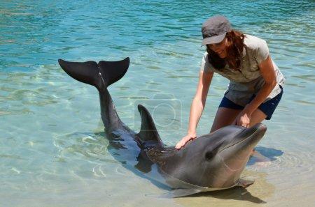 Photo pour Woman interact with Dolphin in Sea World Gold Coast Australia. - image libre de droit