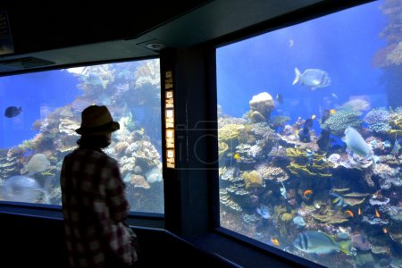 Coral World Underwater Observatory aquarium in Eilat Israel