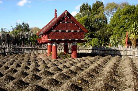 Te Parapara Maori Garden in