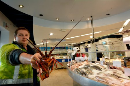 Salesman exhibit lobster in Auckland Fish Market