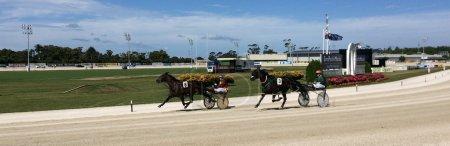Harness racing in Alexandra Park Raceway in Auckland New Zealand