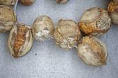 Zralé arekové ořechy