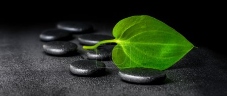 spa concept of zen stones and green leaf on black background wit