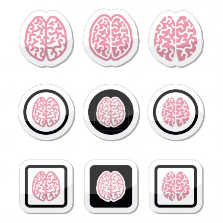 Illustration for Vector icons set of brain isolated on white - Royalty Free Image