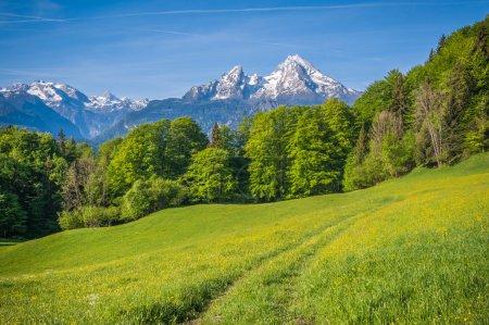 Photo pour Paysage idyllique dans les Alpes avec prairies verdoyantes fraîches, fleurs florissantes, fermes et sommets enneigés en arrière-plan, Parc national Berchtesgadener Land, Bavière, Allemagne - image libre de droit