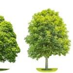 Set of green trees oak, maple, birch, chestnut. Na...
