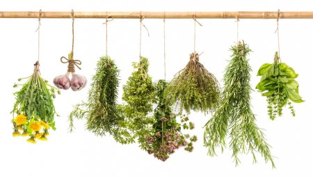 Photo for Hanging bunches of fresh spicy herbs isolated on white background. rosemary, basil, thyme, oregano, marjoram, garlic, dandelion. herbal medicine - Royalty Free Image
