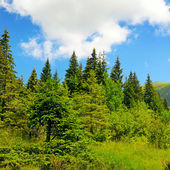 scenic mountains, meadows and blue sky