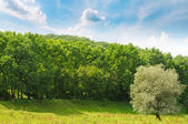 forest, green meadow and blue sky