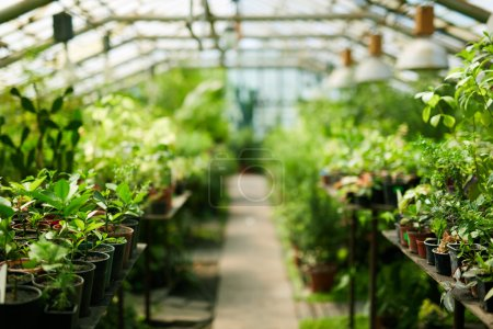 Photo for Interior of greenhouse with growing plants - Royalty Free Image