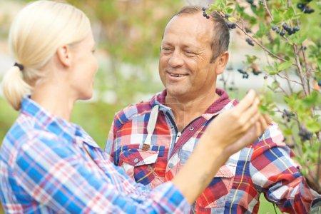 Gardeners talking by aronia tree