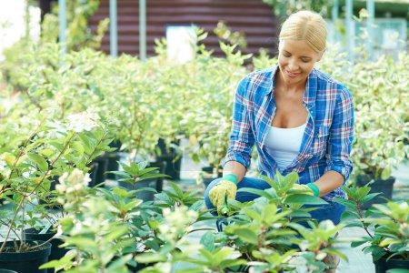 Gardener taking care of plants