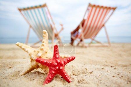 sea stars on sandy beach
