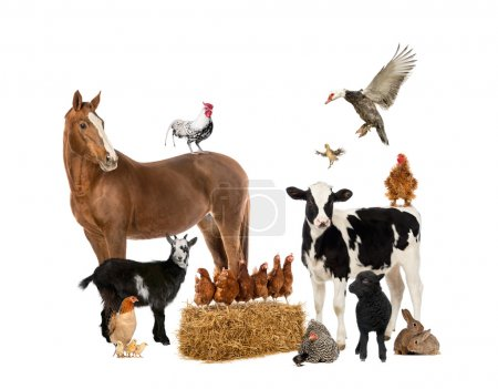 Photo for Group of farm animals - Royalty Free Image