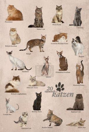 Cat breeds poster in German