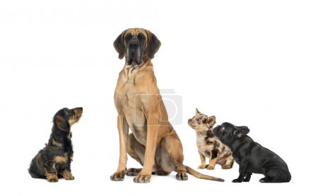Small dogs looking at a big dog