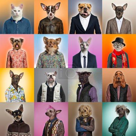 Photo pour Composition des animaux habillés - image libre de droit