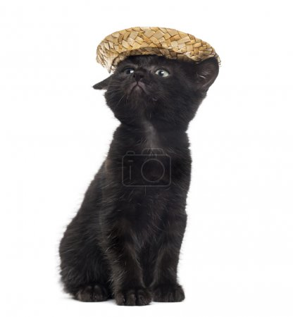 Black kitten wearing a straw hat in front of a white background