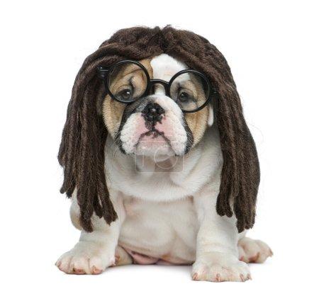 Englischer Bulldoggen-Welpe mit Dreadlocks-Perücke und Brille