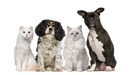 Group of dogs and cats in front of a white background