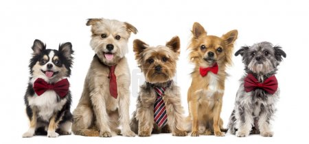 Group of dogs in front of a white background...