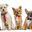 Group of dogs and cats in front of a white backgro...