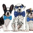 Group of dogs wearing glasses and bow ties...