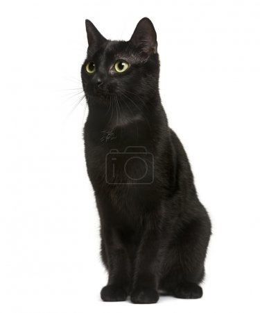 Black cat sitting in front of white background