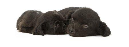 Two Cute Black Puppies Sleeping