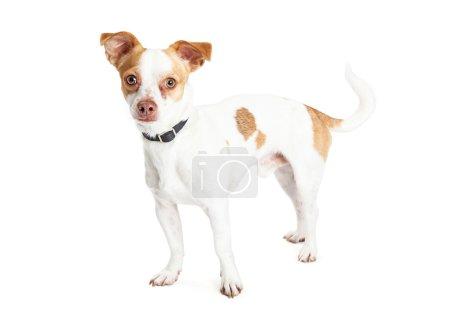 Cute little breed dog
