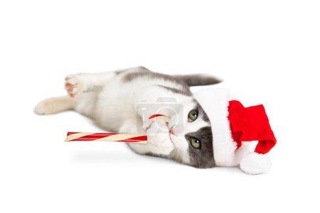 Cute Kitten Santa